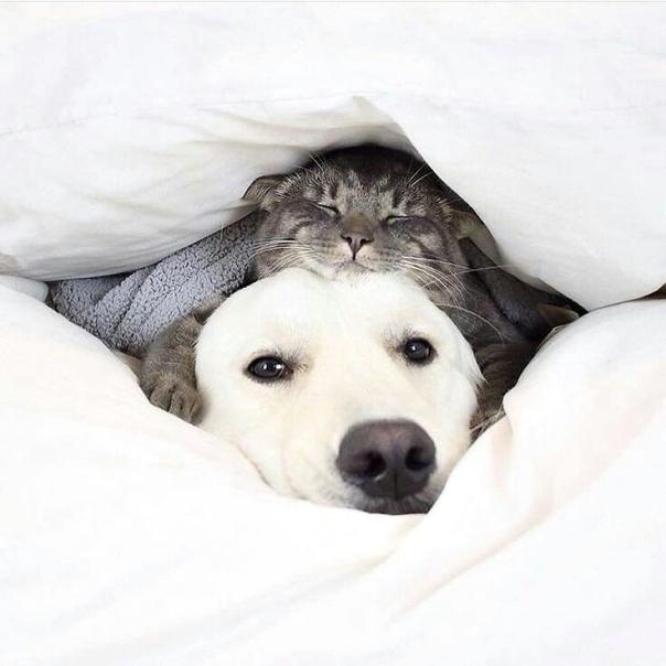 gato na cama com gato