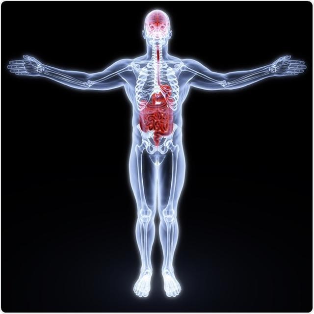 intestino cerebro news medical