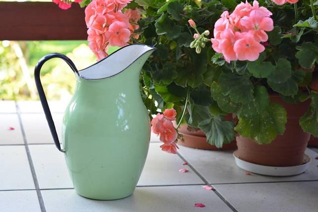 jarro flores regar plantas pixabay