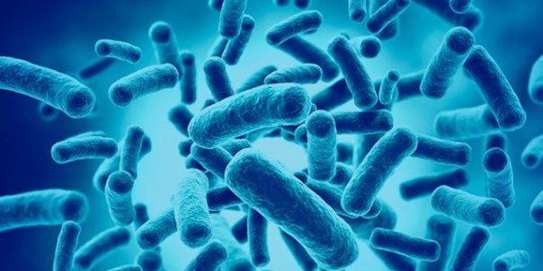 probioticos.jpg