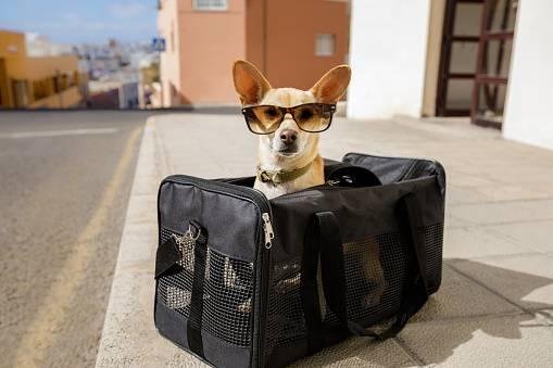 cachorro bolsa oculos viagem