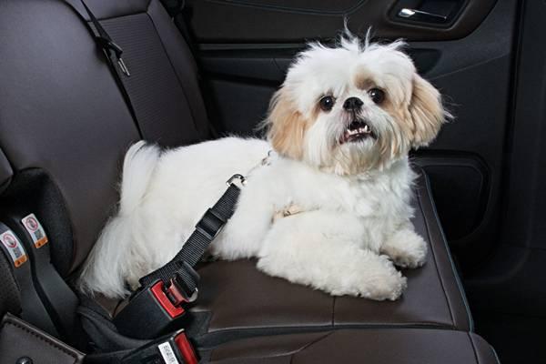 Acessórios originais Chevrolet específicos para PETs