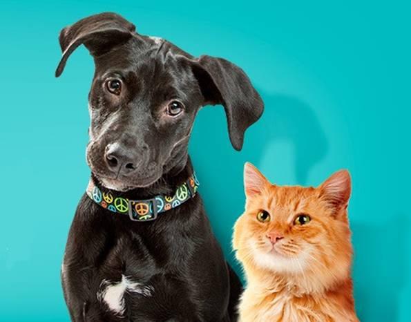 cachorro e gato adocao