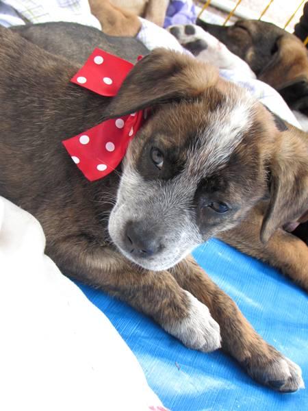 cachorro para adoção morumbi.JPG