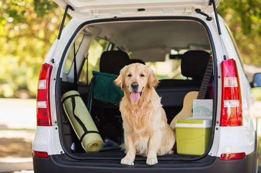 cachorro viagem carro porta malas