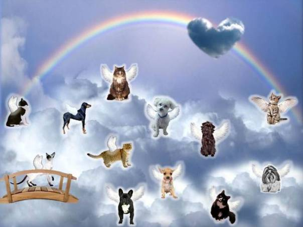 gato cachorro ceu lovethispic