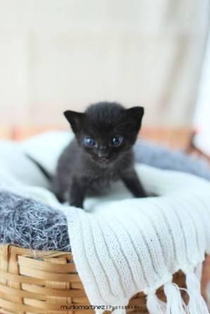 gato recem nascido