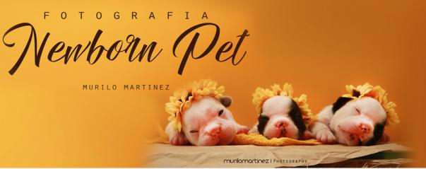 newborn pet 2.png