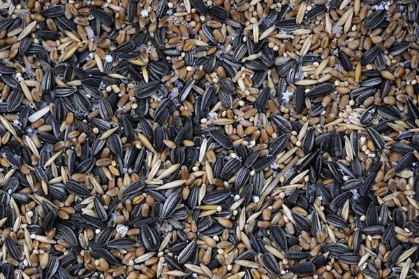 sementes comida de passarinho pixabay