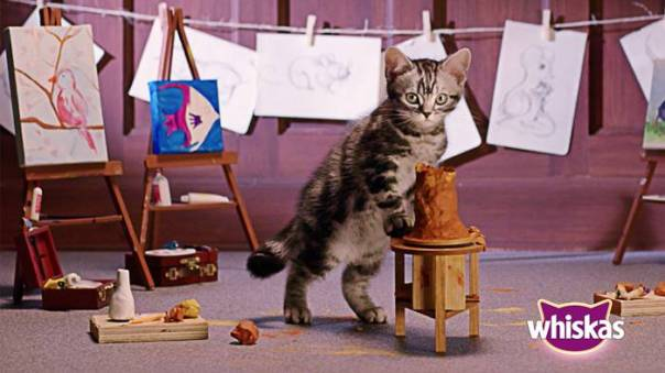 argila gato