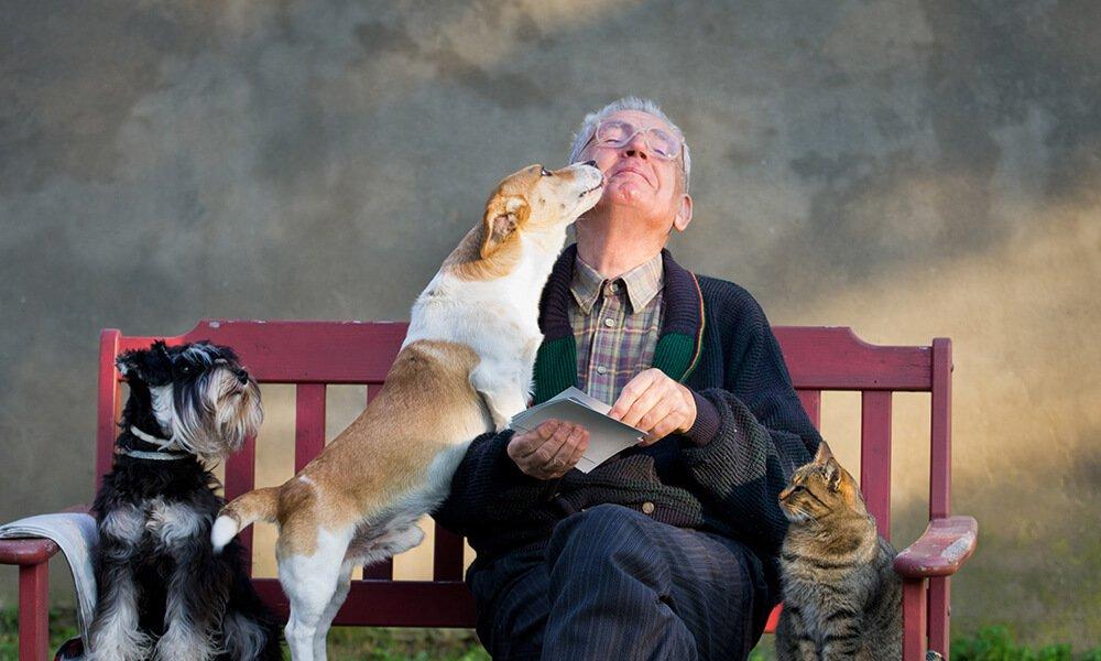 idoso cachorro gato pet
