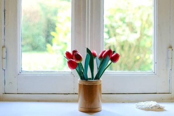 janelas flores tulipa pexels