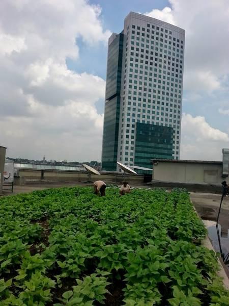 telhado verde shopping eldorado
