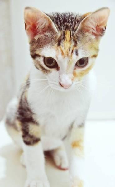 toca dos gatinhos 2