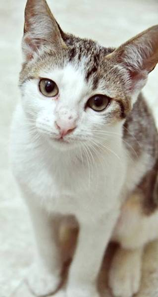 toca dos gatinhos 3