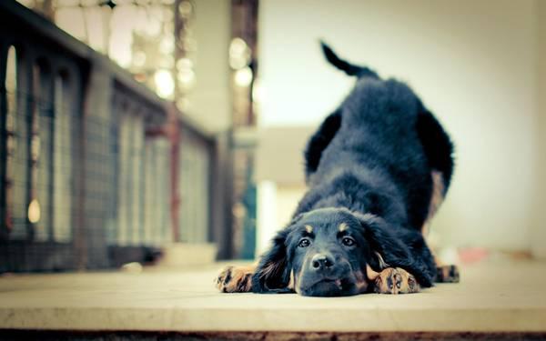 cachorro alongamento