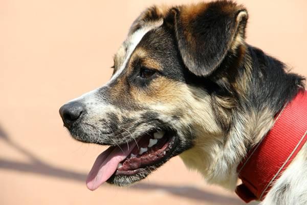 Dog Animal Pet Portrait Animal World