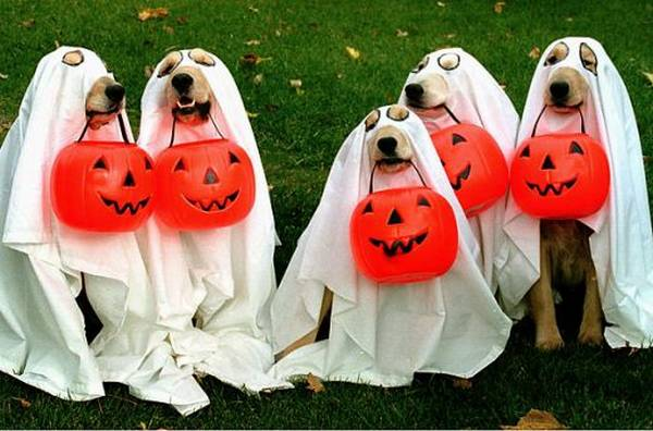 cachorro halloween familypet