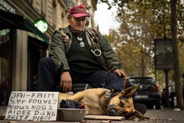 cachorro morador de rua