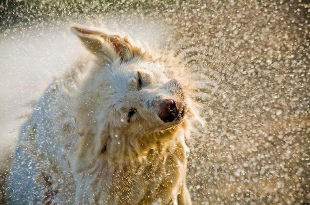 cachorro na agua soiheardmusic