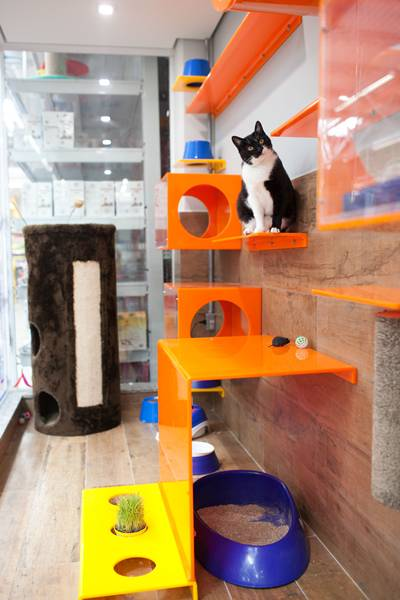 Petz adoção gatil 1