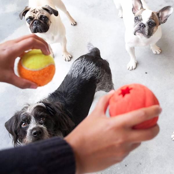 Petz - cães brincando4
