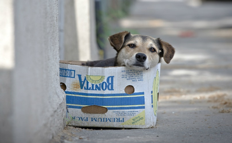 cachorro de rua abandonado barkpost