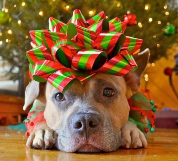 cachorro enfeite presente buttehumane