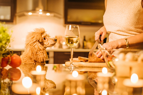 cachorro mesa bebida comida dogster.jpg
