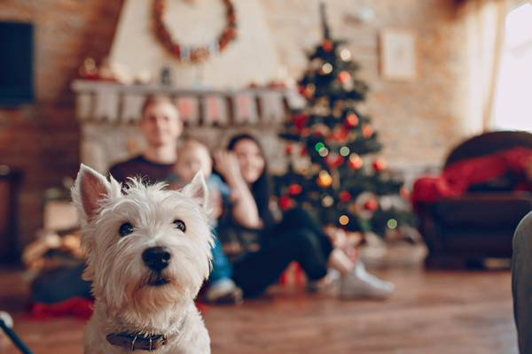cachorro natal fim de ano