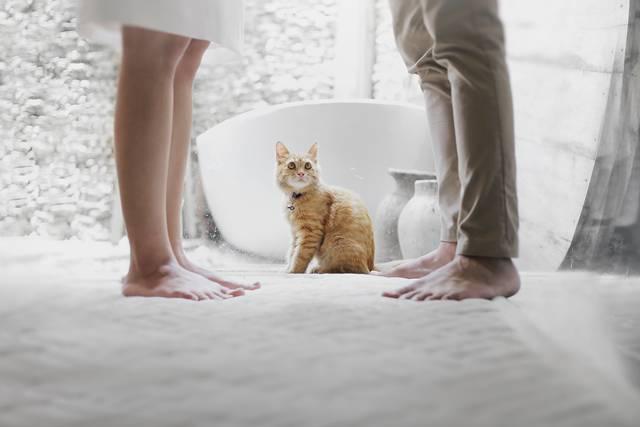 casal e gato pexels