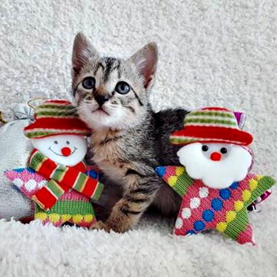 gatinho com brinquedos natal.png