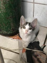 gato 7