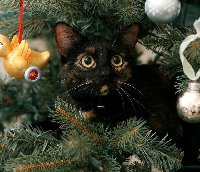 gato na arvore de natal 3