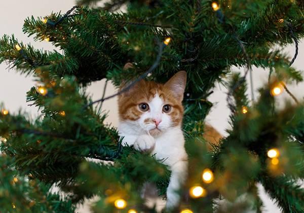 gato na arvore de natal luzes.jpg