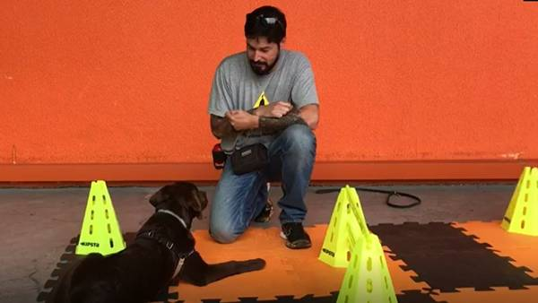 cachorro adestramento hiperzoo