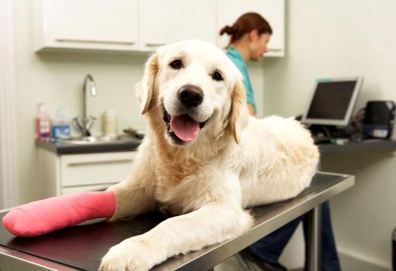 cachorro machucado veterinaria