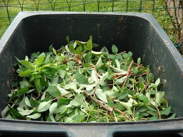 compostagem composteira folhas pixabay