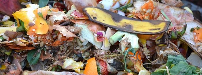 compostagem residuos organicos pixabay