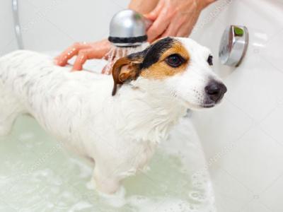 depositphotos_cachorro tomando banho
