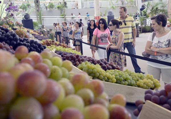 festa da uva1
