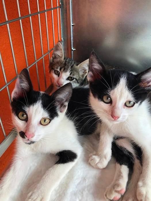 gatinhos beco da esperança.jpg