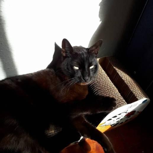 gato preto zezinho 2