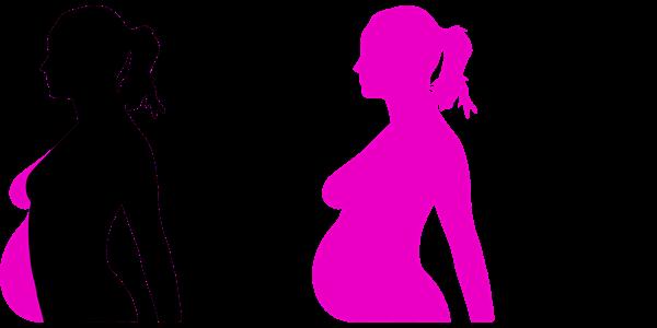 gravidezvectorimagespixabay2