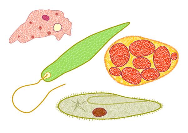 protozoarios microbios dbutlerdidit pixabay