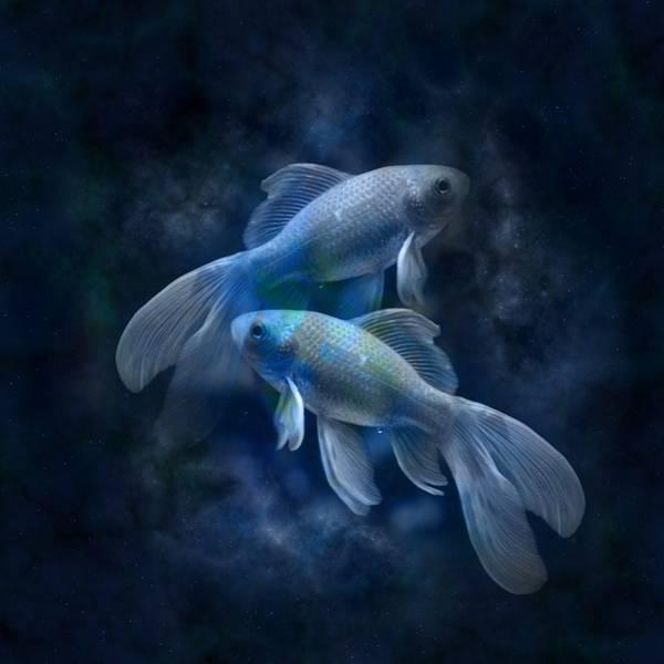 signos peixes geralt pixabay