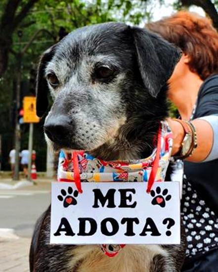 cachorro adoção.png