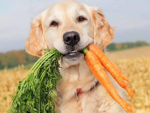 cachorro-vegetais
