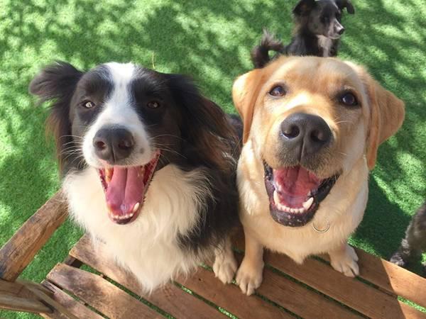 cachorros galeria.jpg