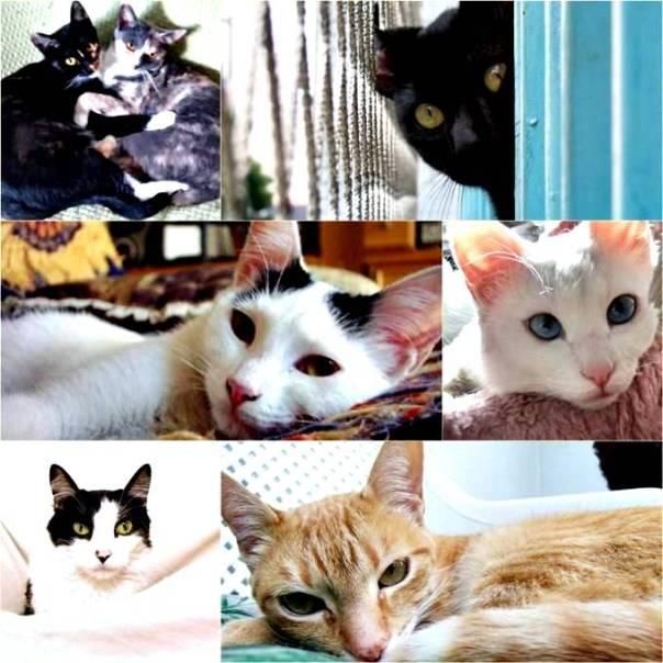 meus-gatos.jpg